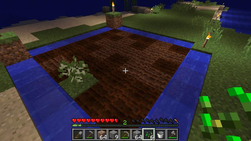 小麦畑作った